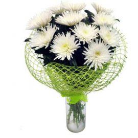 13 игольчатых хризантем белых