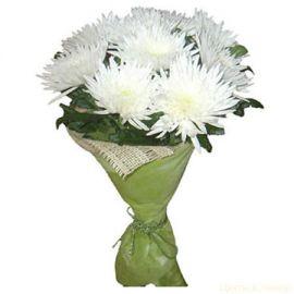 11 игольчатых хризантем белых