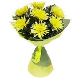 7 игольчатых хризантем белых
