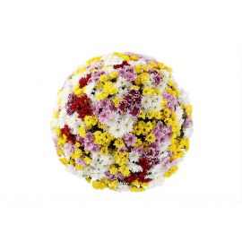 101 кустовая хризантема микс