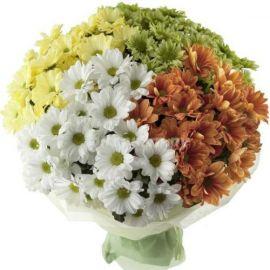 35 хризантем кустовых микс