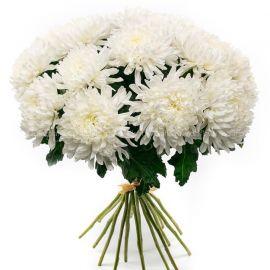 15 хризантем игольчатых белых