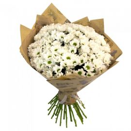 33 хризантем кустовых белых