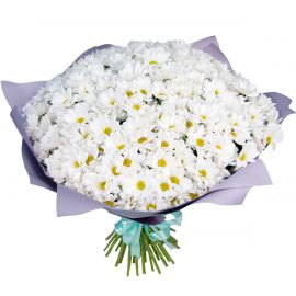 51 хризантема кустовая белая
