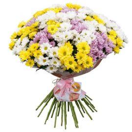 41 хризантема кустовая микс