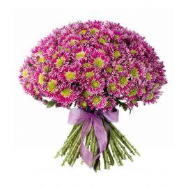 33 хризантемы кустовых розовых