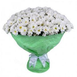 31 хризантема кустовая белая