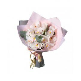 11 орхидей белых