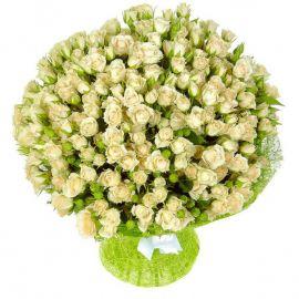51 кустовая роза белая