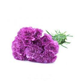 15 гвоздик фиолетовых