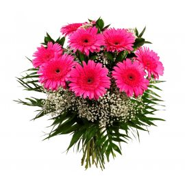 9 гербер розовых