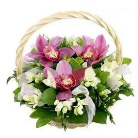 10 фрезий 3 орхидеи